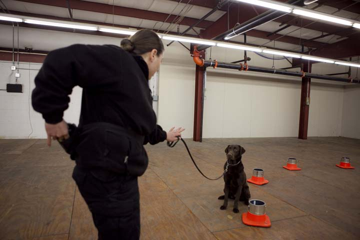 MBTA Transit Police Officer and bomb technician Stacey Cassetta has trained her bomb-sniffing dog to move through the course without interruption. She's helping train the Cambridge Police Department's newly codified unit, Friday, Jan. 31, 2014. Photo by Erin Baldassari/Wicked Local Cambridge.